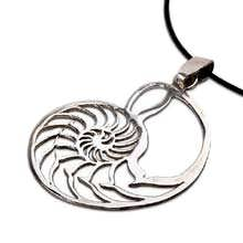 Nautilus shell jewelry