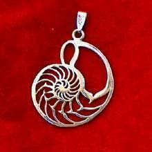 Nautilus Shell Silver