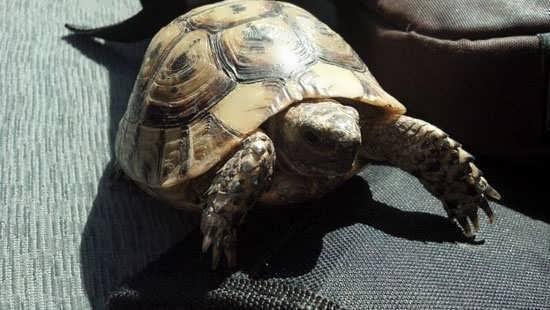 My dear turtle friend
