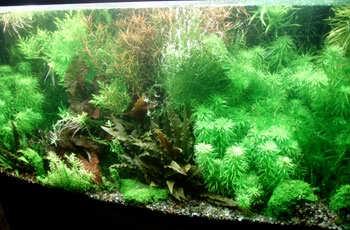 The shrimp forest