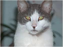 Luben - Green stone eyes…